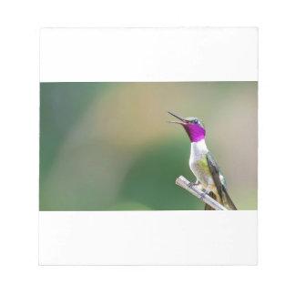Amethyst Woodstar Hummingbird Notepad