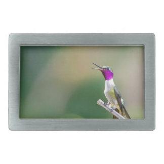 Amethyst Woodstar Hummingbird Rectangular Belt Buckle