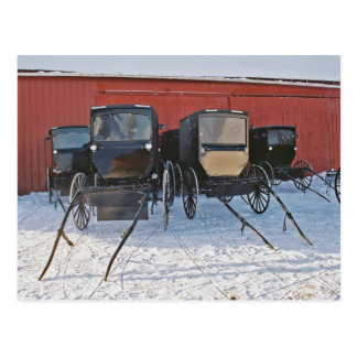 Amish Buggies In Waiting-Postcard Postcard