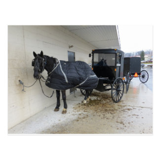 Amish Buggy At Pennsylvania Market Postcard
