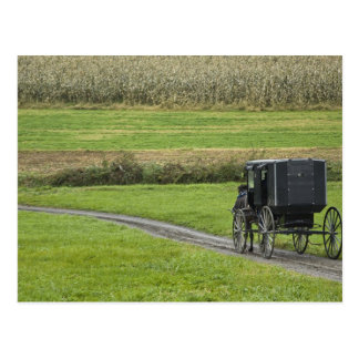 Amish buggy on farm lane, Northeastern Ohio, Postcard