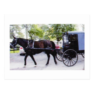 Amish Buggy Ride Postcard