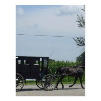 Amish buggy ride post cards