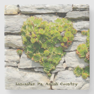 Amish Coasters, Hen and Chicks on Farm Wall! Stone Beverage Coaster