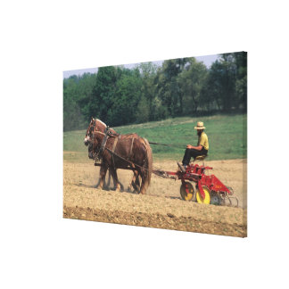 Amish Country simple people in farming with Stretched Canvas Prints