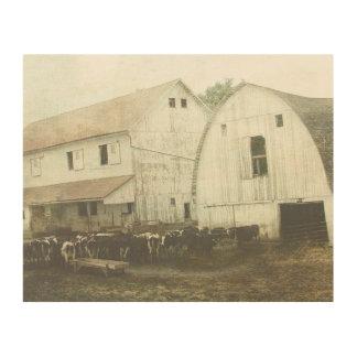 Amish Dairy Cows Wood Print
