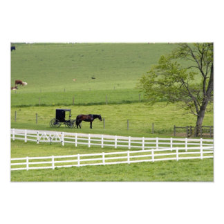 Amish farm with horse and buggy near Berlin, Photo Print