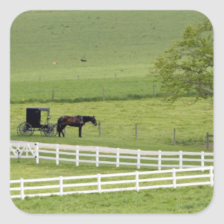Amish farm with horse and buggy near Berlin, Square Sticker