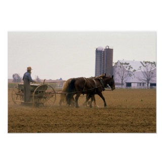 Amish farmer using a horse drawn seed planter poster