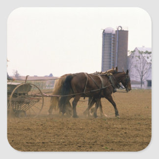 Amish farmer using a horse drawn seed planter square sticker