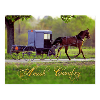 Amish Horse and Buggy, Lancaster, PA Postcard