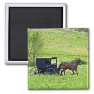 Amish horse and buggy near Berlin, Ohio. Magnet