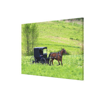 Amish horse and buggy near Berlin, Ohio. Stretched Canvas Prints
