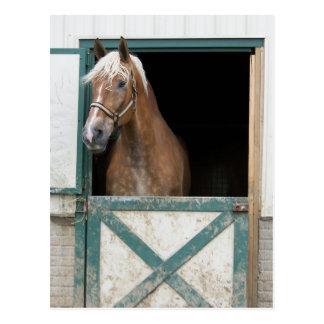 Amish Horse Postcards