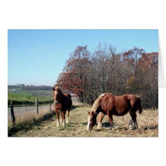 Amish Horses Greeting Card