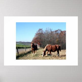 Amish Horses Print