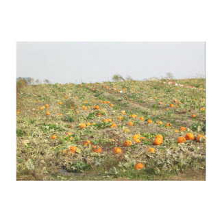 Amish Pumpkin Patch Photography Wall Art