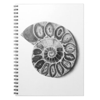 Ammonite Notebook