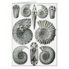 Ammonites Card
