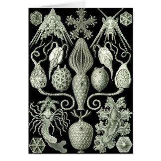 Amphoridea Card