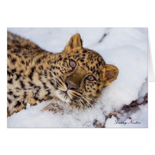 Amur Card