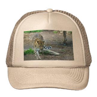 Amur Leopard Cap