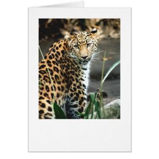 Amur Leopard Card