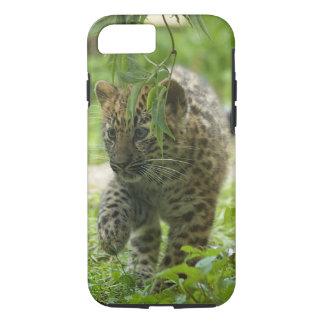 Amur Leopard Cub iPhone 7 Case
