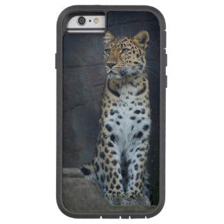 Amur Leopard iPhone 6 Case