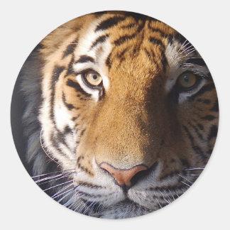 Amur Tiger Classic Round Sticker