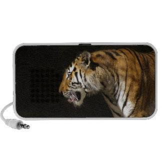 Amur Tiger in Profile PC Speakers