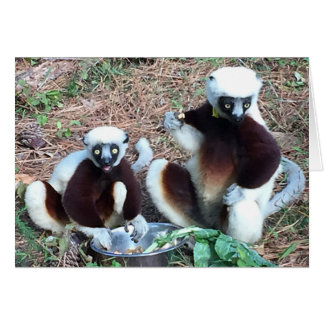 Amusing Lemurs Birthday Greeting Card