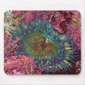 Amzing Green Anemone Mouse Pad