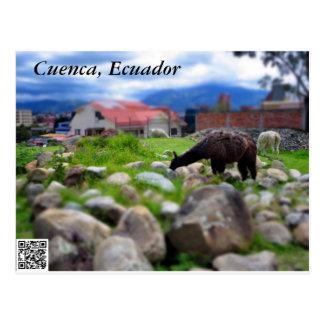 An Alpaca at Pumapungo Postcard