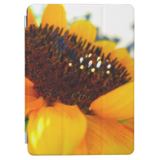 An Angled Sunflower