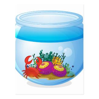 An aquarium with sea creatures postcard