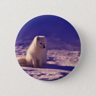 An Arctic Fox in Norway 6 Cm Round Badge