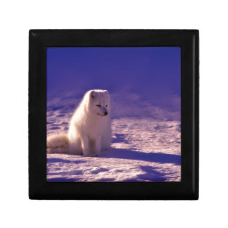 An Arctic Fox in Norway Gift Box