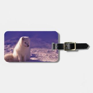 An Arctic Fox in Norway Luggage Tag