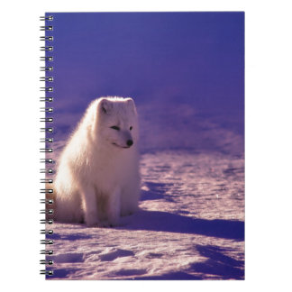An Arctic Fox in Norway Spiral Notebook