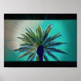 An Arizona Palm Tree Poster