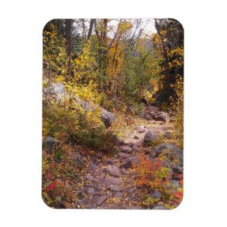 """An Autumn Walk - 3"""" x 4"""" Magnet"""