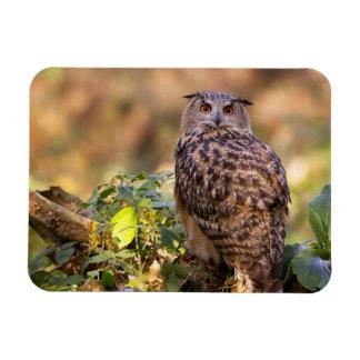An Eagle Owl Rectangular Photo Magnet
