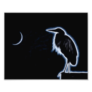 An Electric Blue Heron-Midnight Blue Background Photo Print