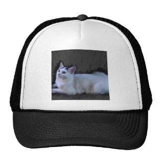 an elegant cat hats