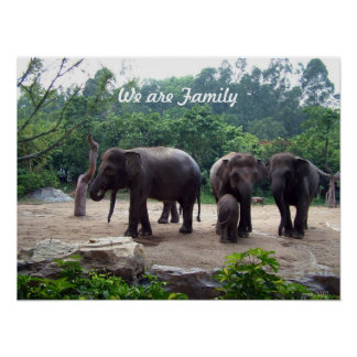 An Elephant family Poster