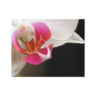 An Orchid For You Canvas Print