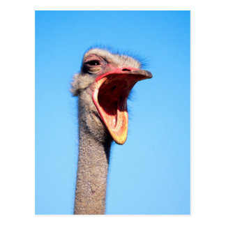 An Ostrich showing aggression Postcard