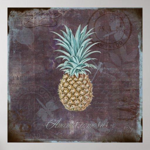 Ananas comosus poster