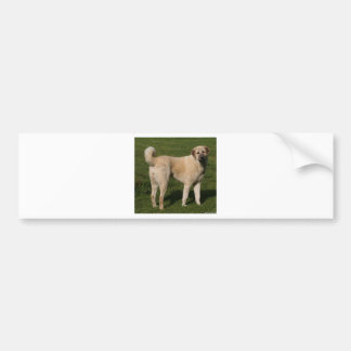 Anatolian Shepherd Dog Bumper Sticker